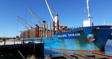 En el puerto de Ibicuy se cargan 34.000 toneladas de madera de pino para exportar a China