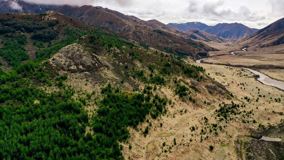 ¿Los árboles invasores pueden contribuir a mitigar el cambio climático?